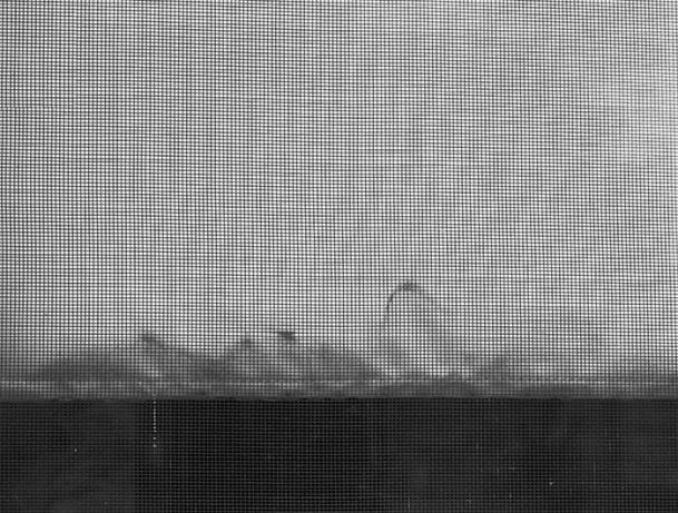 Window Screen, 2012 Archival Inkjet Print